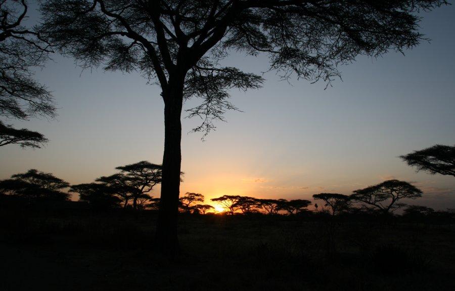 Night game drive at Lake Manyara National Park after sunset