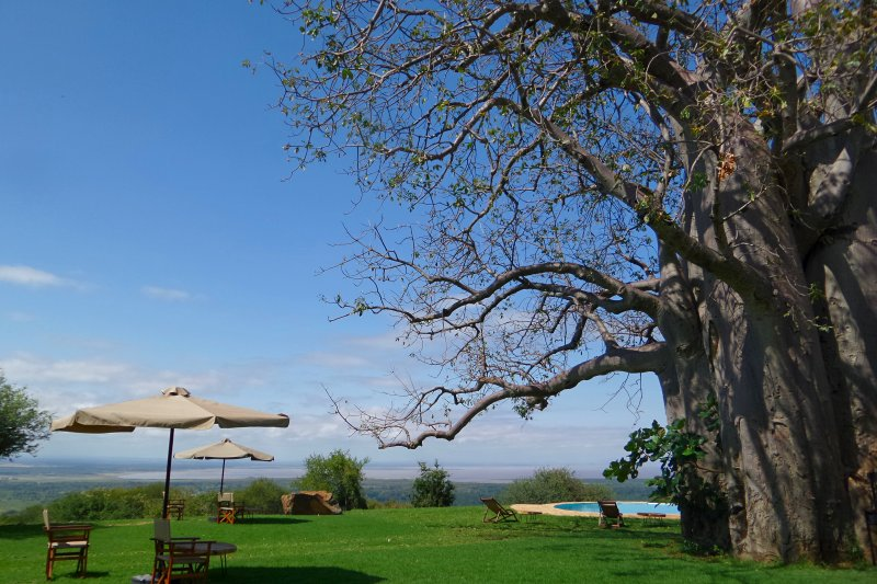 Campsite with giant baobab tree and views at Migombani Camp