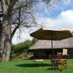 Restaurant, garden and baobab tree at Migombani Camp