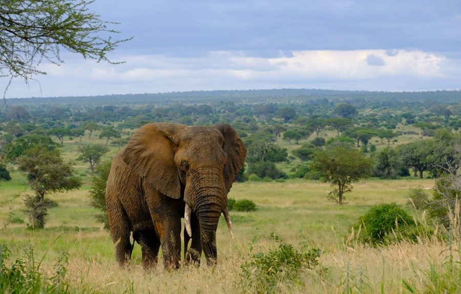 Game drive in Tarangire National Park Tanzania